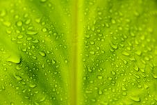 Free Leaf With Rain Droplets Stock Image - 10050351