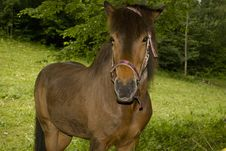 Free Brown Horse Stock Photography - 10051252