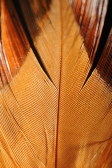 Free Feather Closeup Stock Images - 10051914