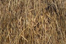 Free Hay Piles Royalty Free Stock Image - 10052176