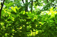 Free Bright Green Plants Royalty Free Stock Photos - 10052328