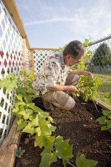 Free Gardening Stock Image - 10053141
