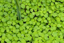 Free Damp And Green Royalty Free Stock Photos - 10053818