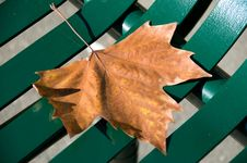 Free Autumn Leaf Stock Photos - 10057873