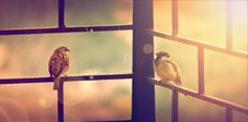 Free Birds Sitting Outside Royalty Free Stock Photography - 100552047