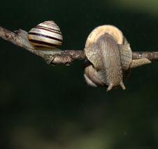 Free Snails And Slugs, Snail, Molluscs, Fauna Royalty Free Stock Photo - 100569815