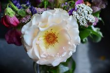 Free Flower, White, Rose Family, Rose Royalty Free Stock Photo - 100571525