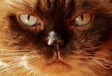 Free Cat, Whiskers, Face, Nose Royalty Free Stock Images - 100571669
