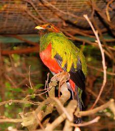Free Bird, Fauna, Beak, Parrot Royalty Free Stock Photos - 100572888