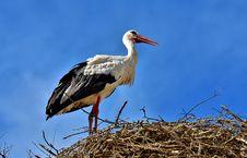 Free Bird, White Stork, Stork, Ciconiiformes Royalty Free Stock Photos - 100572898
