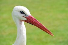 Free Bird, Beak, White Stork, Stork Royalty Free Stock Photos - 100573148