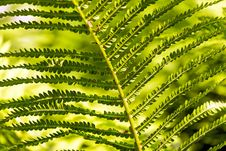 Free Vegetation, Ferns And Horsetails, Plant, Fern Stock Photos - 100573703
