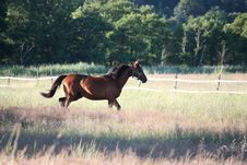 Free Horse, Pasture, Mare, Stallion Royalty Free Stock Images - 100576809