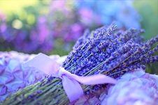 Free Blue, Flower, Purple, Lavender Stock Photos - 100576953