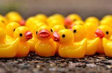 Free Yellow, Water Bird, Beak, Ducks Geese And Swans Stock Photo - 100577130