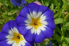 Free Flower, Blue, Plant, Flora Stock Image - 100577891