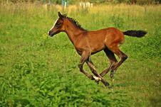 Free Horse, Ecosystem, Pasture, Horse Like Mammal Royalty Free Stock Photos - 100578048