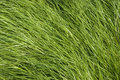 Free Grass Texture Stock Photo - 10068270