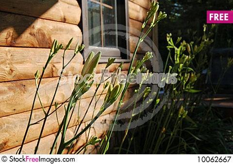 Free Budding Flowers. Royalty Free Stock Photography - 10062667