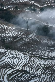 Free Rice Terraces Royalty Free Stock Images - 10061079