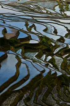 Free Rice Terraces Stock Images - 10061094