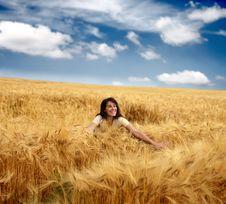 Free Wheat Royalty Free Stock Photos - 10061548