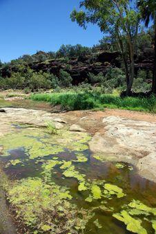 Palm Valley, Australia Royalty Free Stock Photos