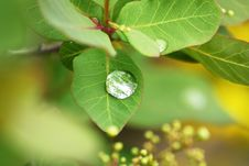 Free Dew Drops On A Leaves Stock Photos - 10063413