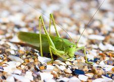 Free Locust Stock Images - 10063444