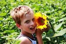 Free Young Teenager Boy With Sunflower Stock Photography - 10063772