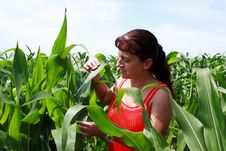 Agronomist Woman In The Middle Of A Corn Field Stock Images
