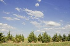 Free Beautiful Sky And Fir Trees Royalty Free Stock Photo - 10064525