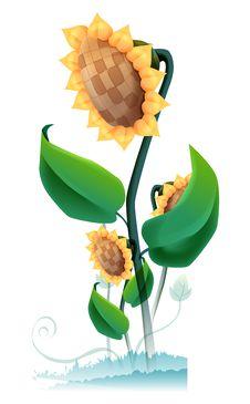 Free Sunflower Stock Photos - 10064973