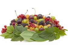 Free Berry Stock Photos - 10066363