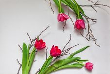 Free Flower, Flowering Plant, Plant, Floristry Royalty Free Stock Image - 100625876