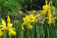 Free Flower, Plant, Yellow, Flowering Plant Stock Photo - 100626510
