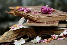 Free Flower, Pink, Petal, Floristry Royalty Free Stock Photos - 100626748