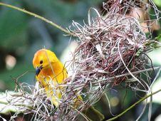 Free Bird, Beak, Fauna, Bird Nest Royalty Free Stock Image - 100627446
