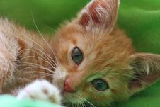 Free Cat, Whiskers, Face, Fauna Royalty Free Stock Photography - 100627637
