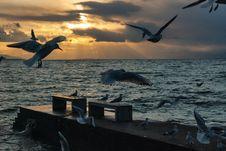 Free Sea, Sky, Seabird, Water Stock Photos - 100627893