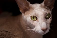 Free Cat, Whiskers, Face, Mammal Royalty Free Stock Photos - 100628008
