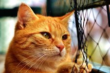 Free Cat, Whiskers, Small To Medium Sized Cats, Fauna Stock Images - 100628444