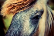 Free Horse, Hair, Mane, Eye Royalty Free Stock Photo - 100630015
