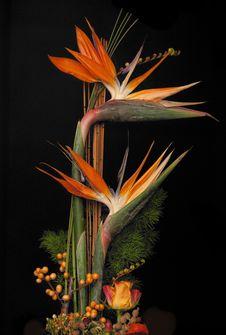 Free Flower, Plant, Flora, Floristry Royalty Free Stock Photos - 100631018