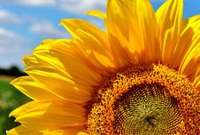 Free Flower, Sunflower, Yellow, Sunflower Seed Stock Images - 100631144