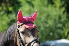 Free Horse, Bridle, Halter, Horse Tack Stock Photography - 100631542