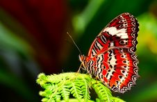 Free Butterfly, Insect, Moths And Butterflies, Brush Footed Butterfly Royalty Free Stock Image - 100631596