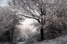 Free Winter, Tree, Frost, Snow Royalty Free Stock Photos - 100632198