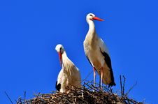 Free Bird, White Stork, Stork, Beak Royalty Free Stock Photo - 100633045