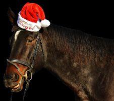Free Horse, Bridle, Halter, Horse Tack Stock Photo - 100633420
